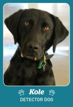 Photo shows detector dog Kole