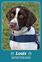 Photo shows detector dog Louis