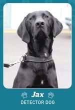 Photo shows detector dog Jax