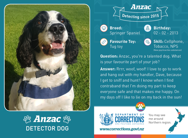 Detector dog cards, start collecting all 27 cards.